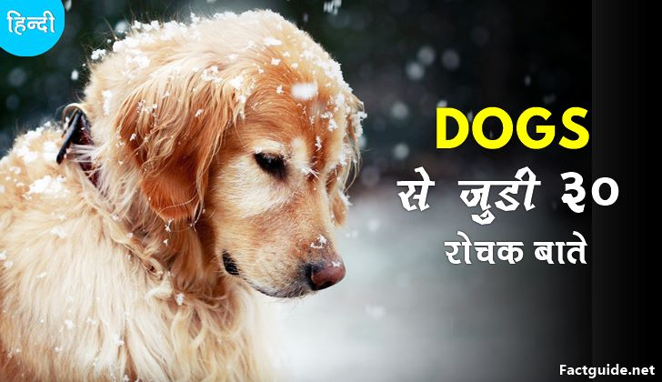 dogs facts in hindi