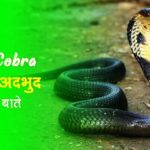 king-cobra-facts-in-hindi