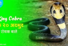 king cobra facts in hindi