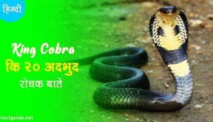 king cobra facts in hindi
