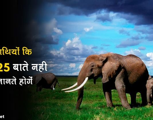 elephant facts in hindi