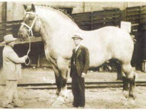 Sampson horse