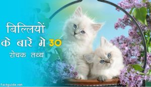 cat facts in hindi