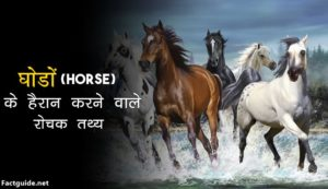Horse Facts In hindi