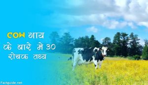 Cow Facts In Hindi