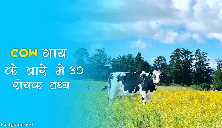 गाय से जुड़े 30+ रोचक तथ्य | Cow Facts In Hindi