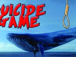 blue whale facts in hindi