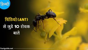 ant facts in hindi