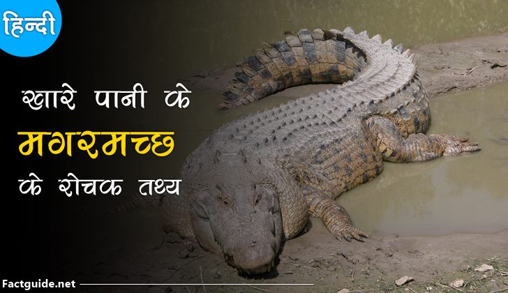 crocodile facts in hindi