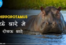 hippopotamus facts in hindi
