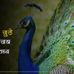 peacock facts in hindi
