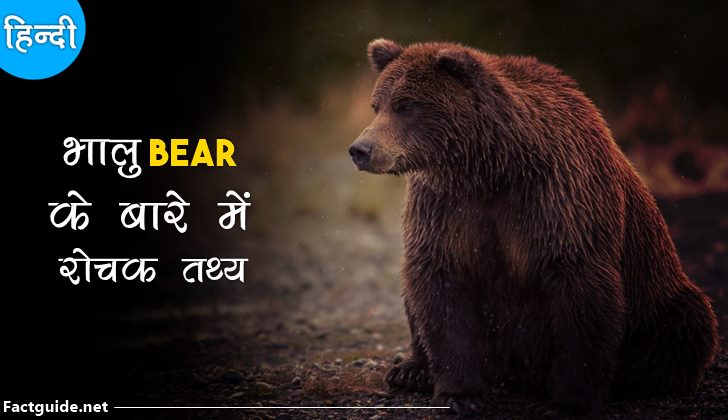 bear facts in hindi