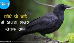 crow facts in hindi