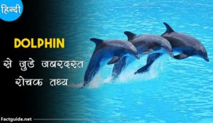 dolphin facts in hindi