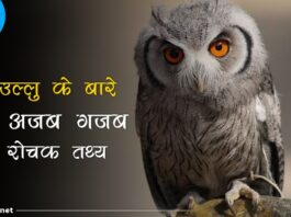 owl facts in hindi