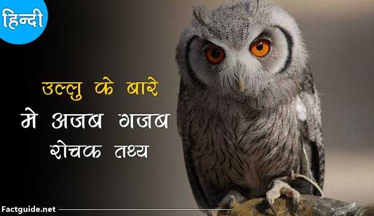 उल्लू के बारे में 17 रोचक तथ्य | Owl Facts In Hindi