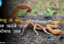 scorpion facts in hindi