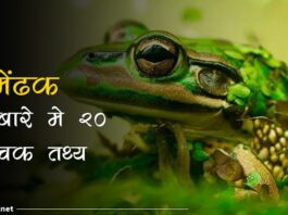 frog facts in hindi