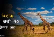 giraffe facts in hindi
