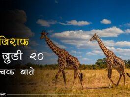 giraffe facts in hindi