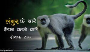 langur facts in hindi