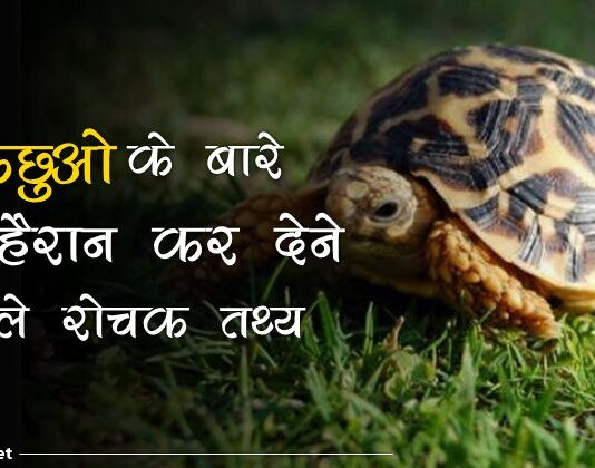 turtle facts in hindi