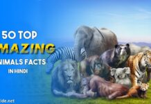 animal facts in hindi