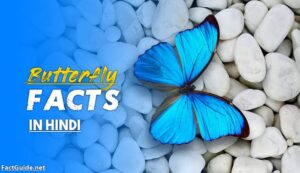 butterfly facts in hindi