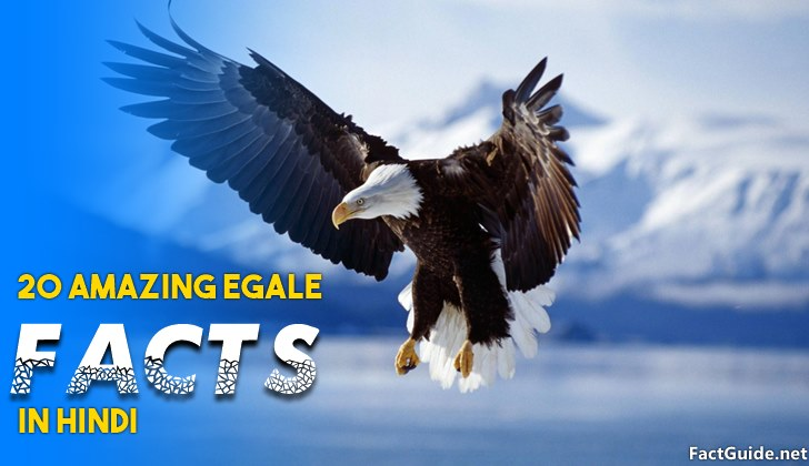eagle facts in hindi