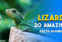 lizard facts in hindi