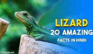 lizard facts in hindi