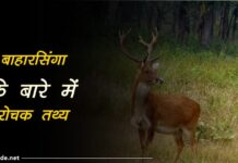 barasingha facts In hindi