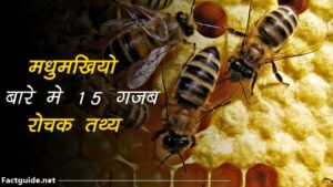 bee facts in hindi