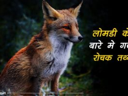 fox facts in hindi