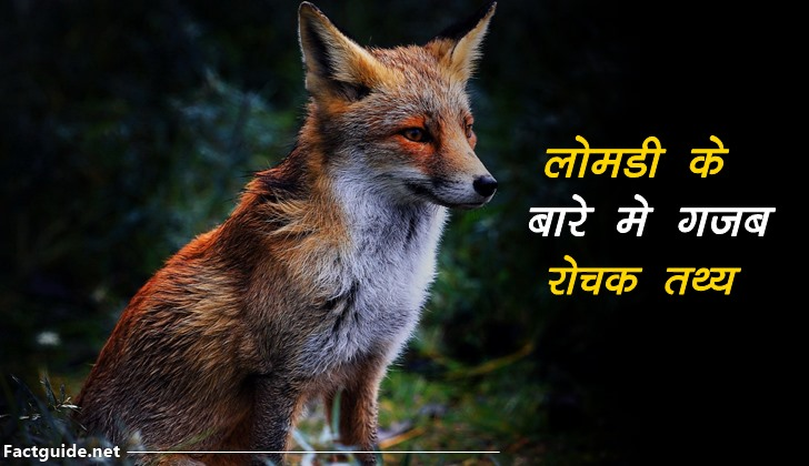 fox facts in hindi