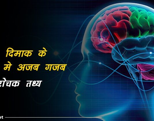 brain facts in hindi