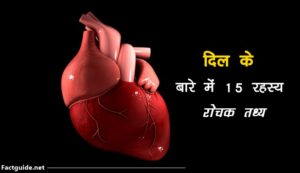 heart facts in hindi
