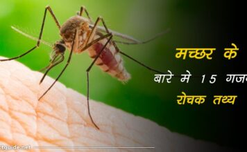 mosquito facts in hindi