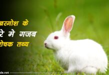 rabbit facts in hindi
