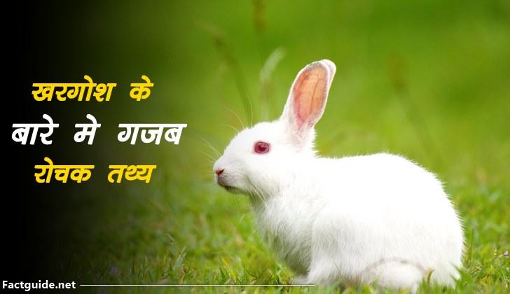 rabbit facts in hindi