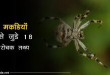 spider facts in hindi
