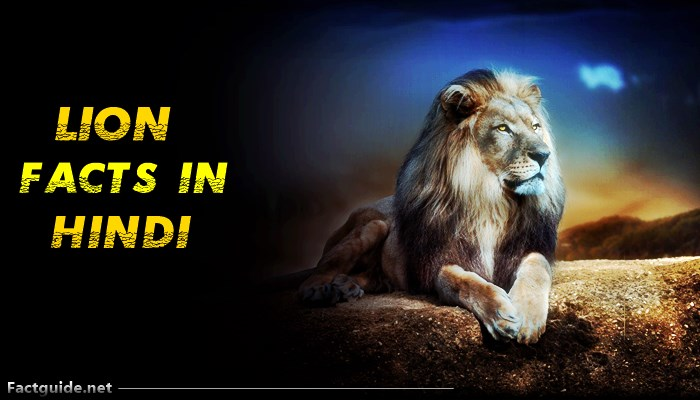 शेर के बारे में 21 रोचक तथ्य | Lion Facts in Hindi