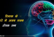 amazing brain facts in hindi