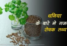 coriander information in hindi