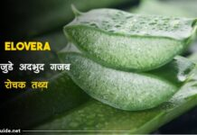 aloe vera facts in hindi