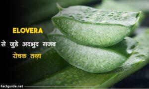 aloe vera facts in hindi
