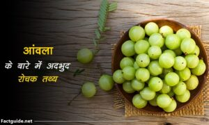 gooseberry facts In hindi