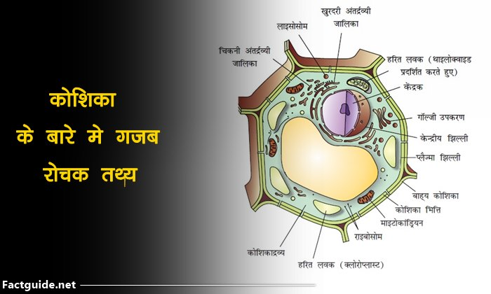 The cell facts in hindi
