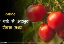 facts about mango in hindi
