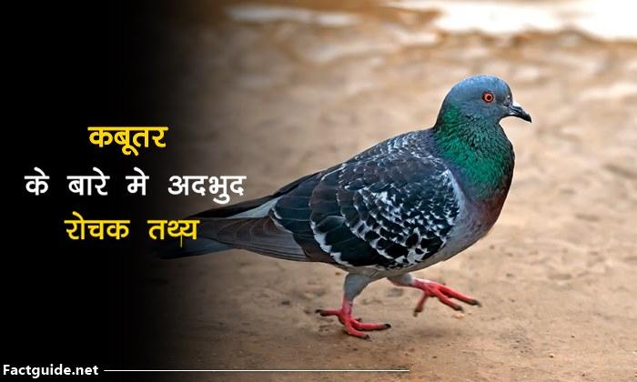 कबूतर के बारे में रोचक तथ्य | Pigeon Facts In Hindi